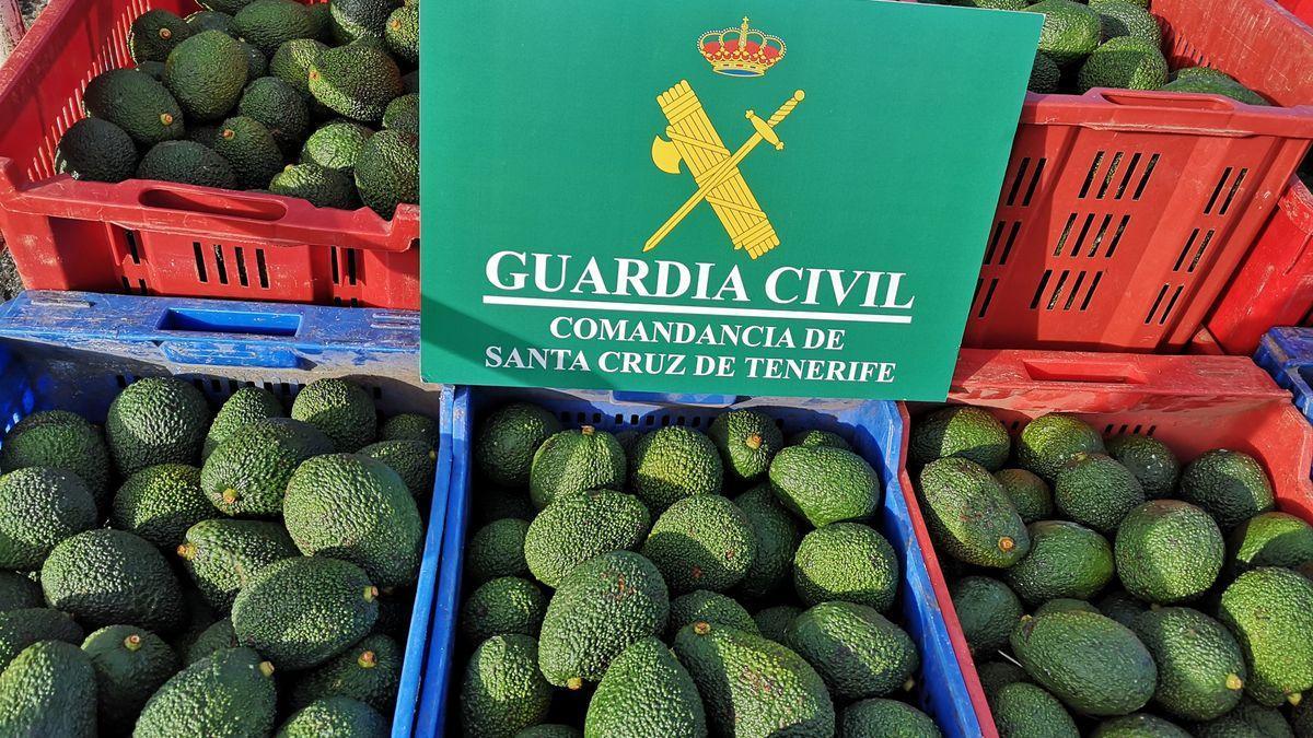 Aguacates robados en una finca de Tenerife.