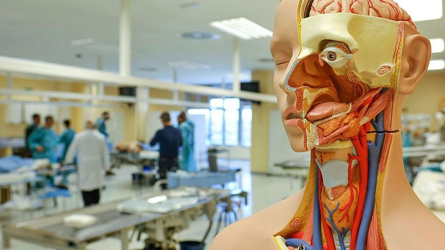 El 76% de los estudiantes de Medicina de la UMH muestra ansiedad o depresión