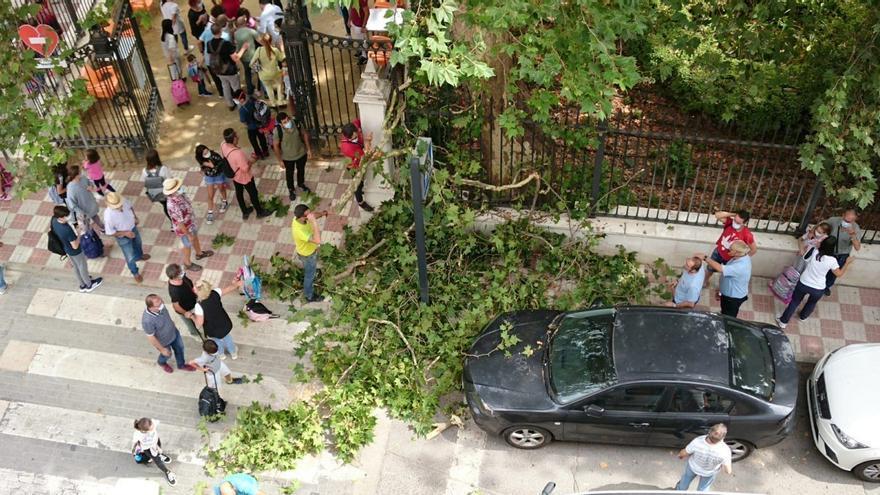 Una gran rama de un árbol cae sobre una familia en Cabra a la salida de un colegio