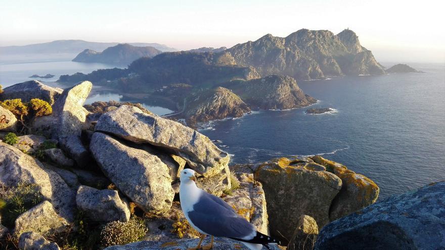 Islas Cíes: rutas gratis y guiadas para descubrir el paraíso