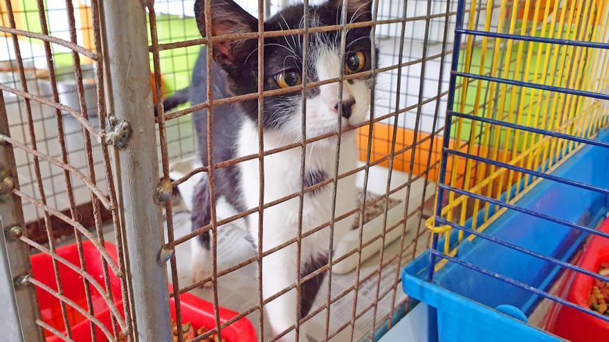 Adopciones con gato encerrado: destapan una estafa en Galicia