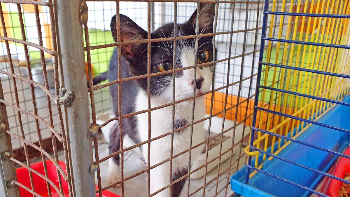 Foto de archivo de un gato en una protectora de animales.