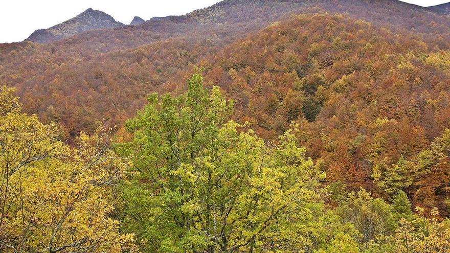 Un valle de maleza: el 40 por ciento de la comarca es matorral, según los geógrafos