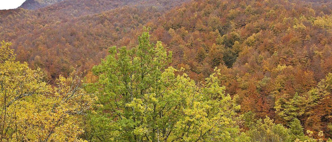 Un bosque en la zona de Canaleya, en el parque natural de Redes.