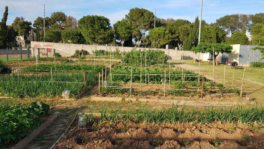 Asociaciones agrícolas reclaman acceder a los huertos de autoconsumo