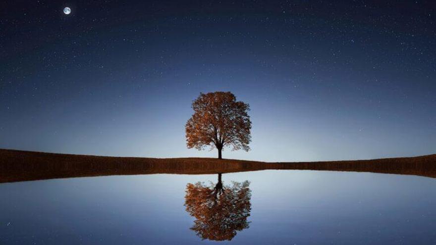 Las sombras de los árboles pueden desvelar vida en los exoplanetas