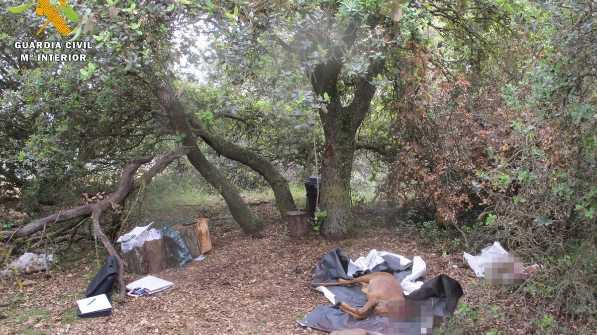 Investigadas dos personas por cazar un corzo en un coto de Mainar sin autorización de su titular