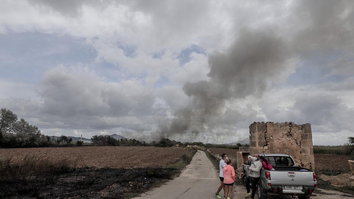 Incendio en s'Albufera de Muro