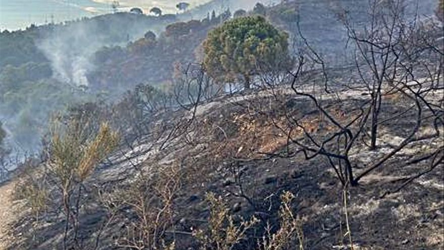 Un incendi crema deu hectàrees al parc de Collserola  de Barcelona