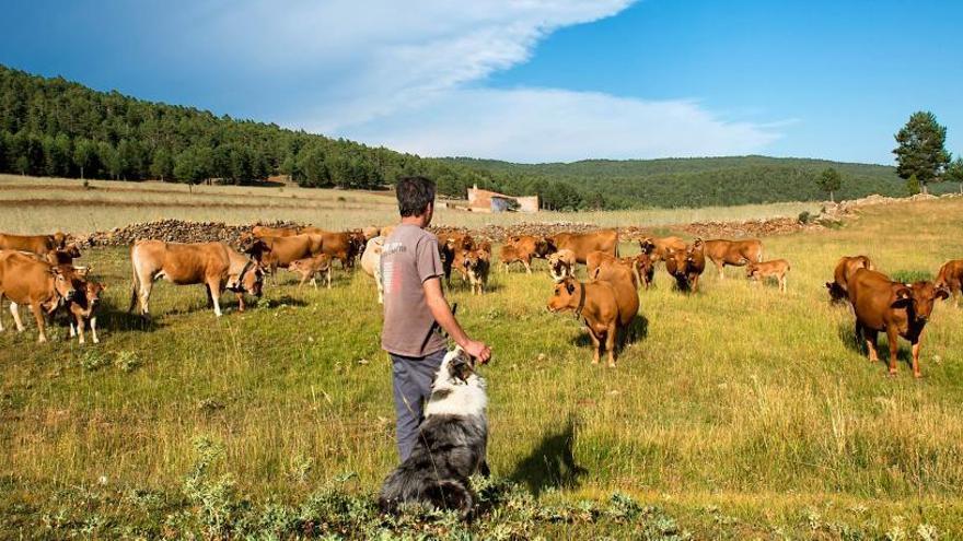 Una escuela para  los nuevos pastores