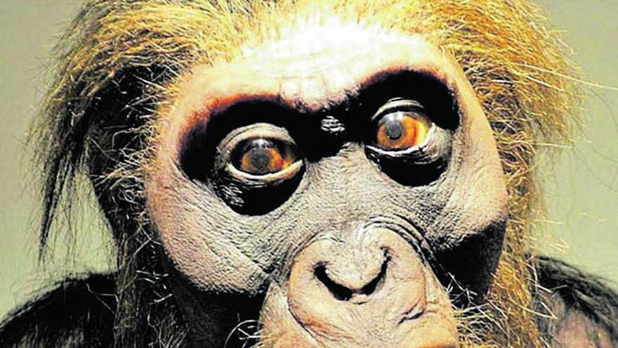 El eslabón perdido entre primates y humanos