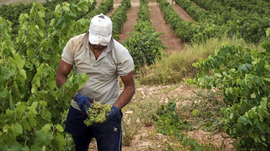 Los viticultores afectados por el pedrisco comienzan a cobrar las ayudas en agosto