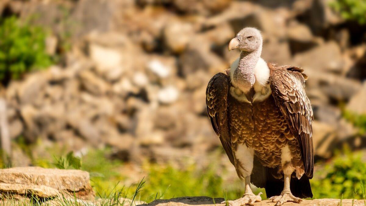 Alerta roja en Salamanca: 56 aves rapaces muertas por envenenamiento