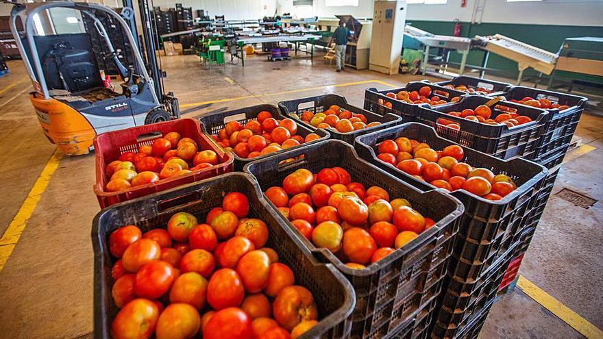 Frutas y verduras directas del agricultor a la mesa