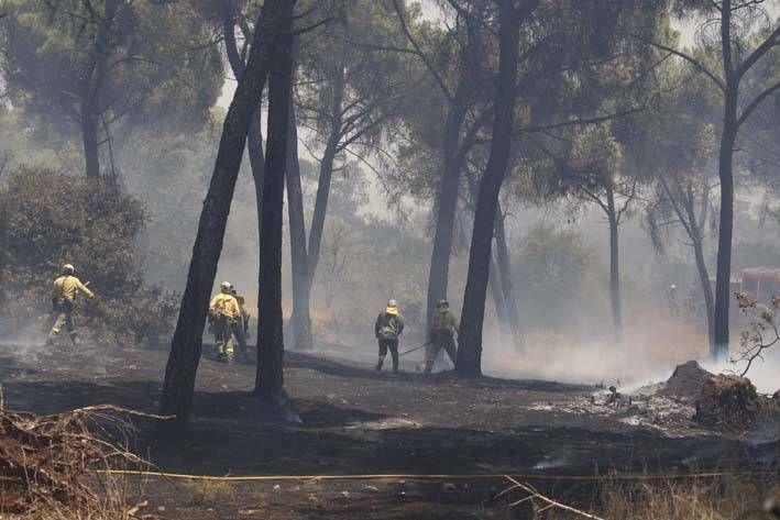 Las imágenes del incendio en el entorno del hospital de Los Morales.