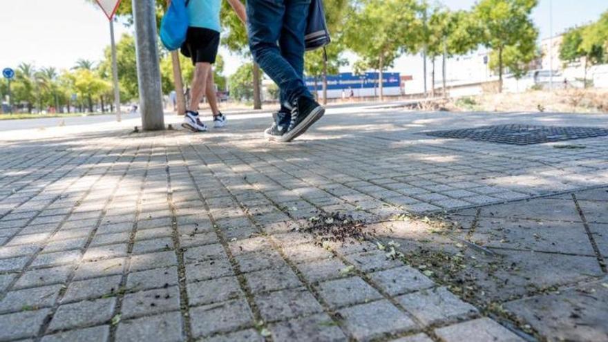 Vecinos de la Ronda Norte urgen acabar con la plaga de hormigas