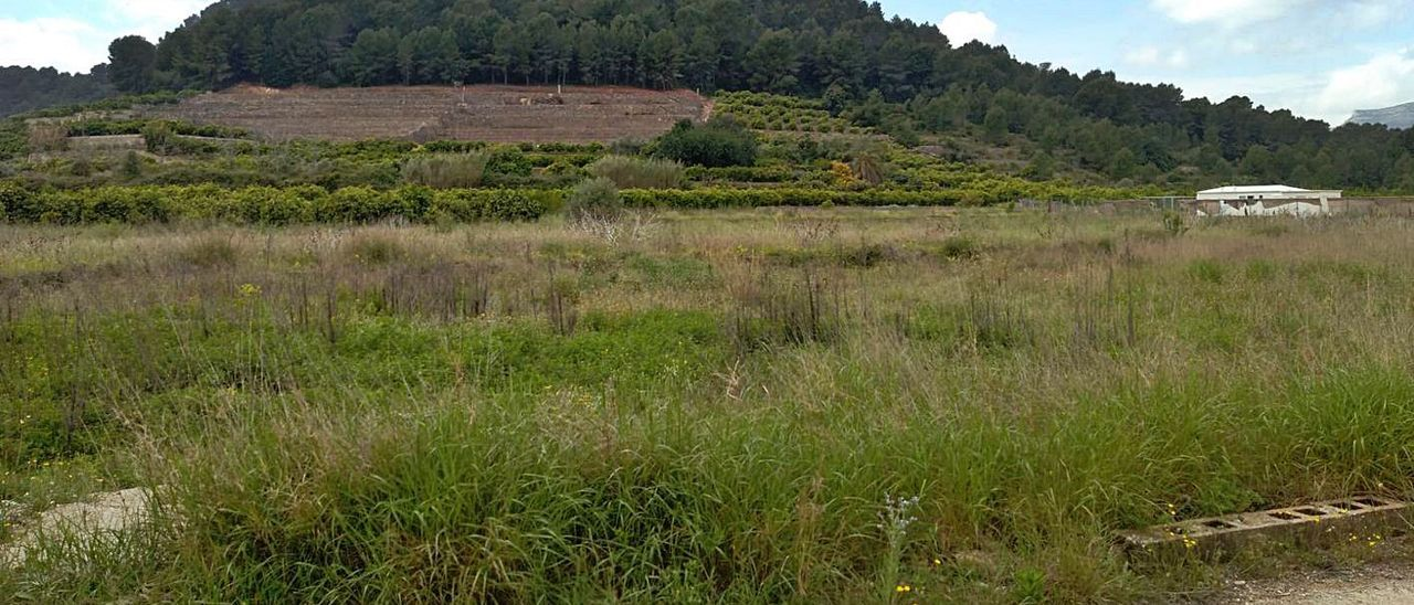 Un promotor alemán plantea construir un cementerio de cenizas en Palma de Gandia