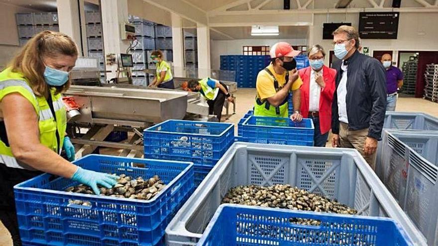El sector marisquero vuelve a la actividad