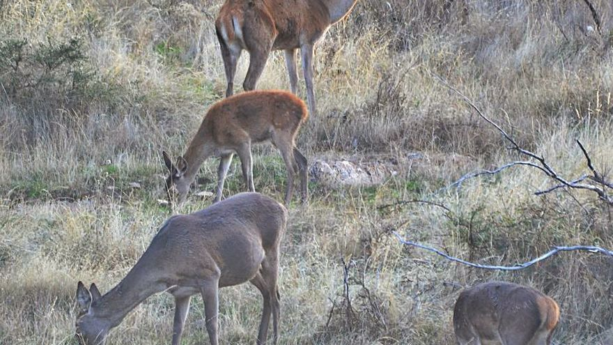 El Tribunal Supremo establece que la caza en tiempo de veda es delito