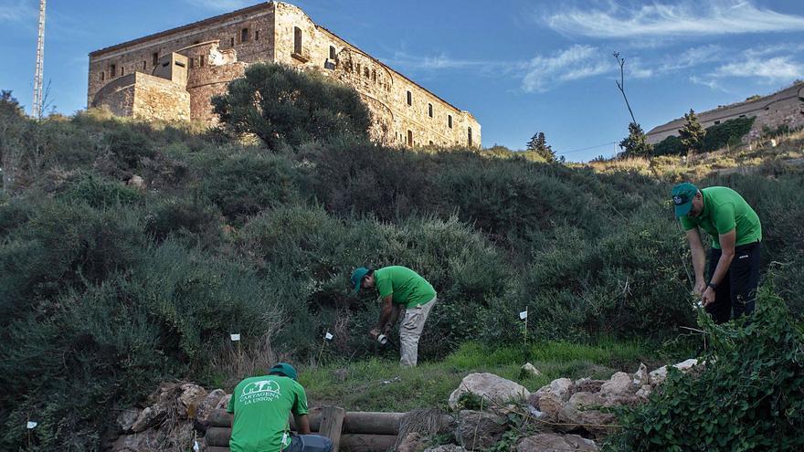 El ciprés será reforestado en el acuartelamiento militar de Fajardo