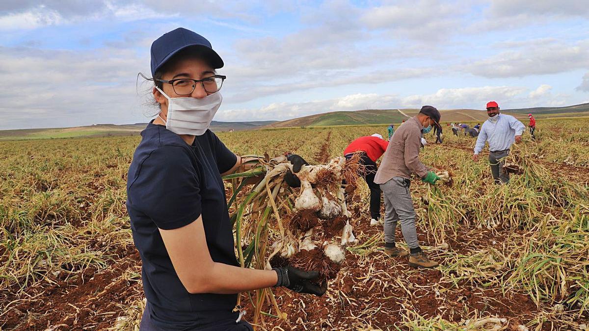 Trabajadores del campo, durante la recogida de ajos, en una finca de la Campiña. | A. J. GONZÁLEZ