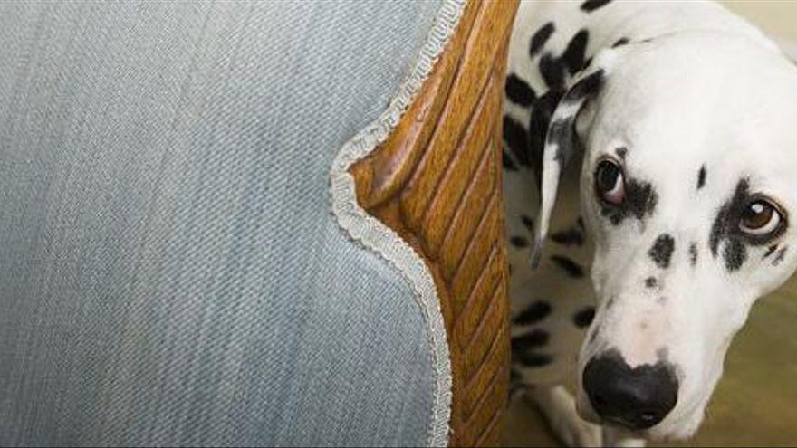 Com evitar que els gossos s'espantin amb els petards