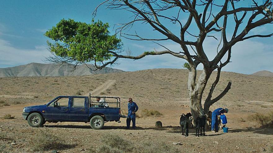 El cine canario 'asalta' el mercado europeo con seis nuevos largos