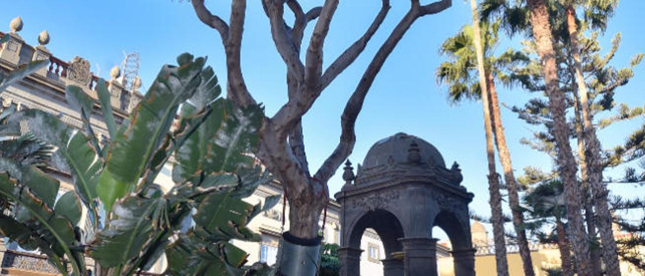 Las Palmas de Gran Canaria, mucho más que palmeras