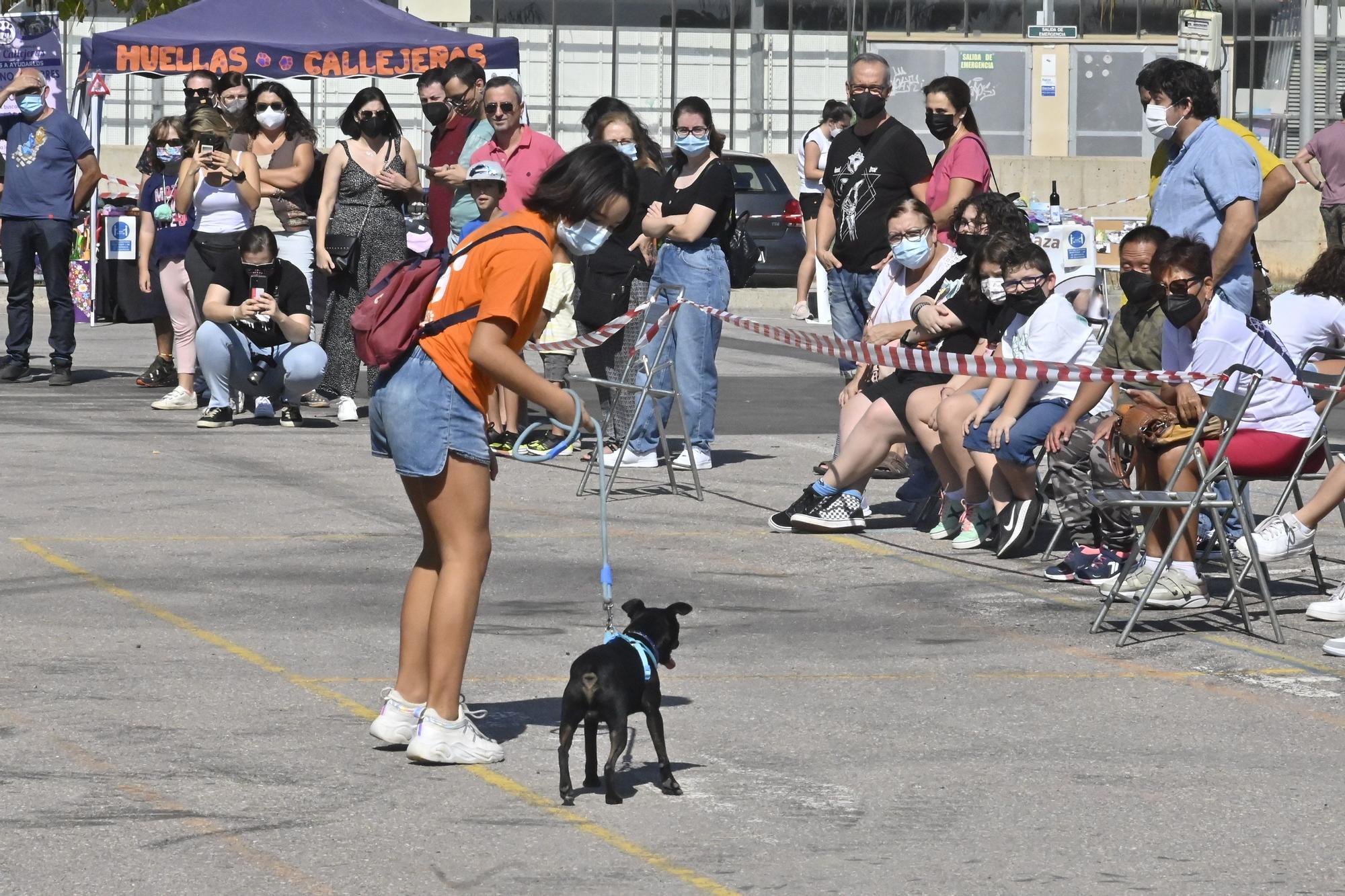 Vila-real busca un nuevo hogar a perros y gatos en la feria de la adopción