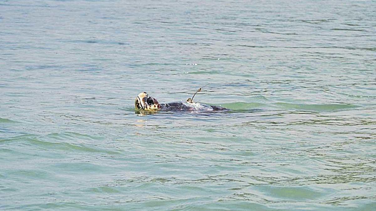 Sparrow cruza el Mediterráneo tras surcar aguas de Almería, Murcia y Baleares.