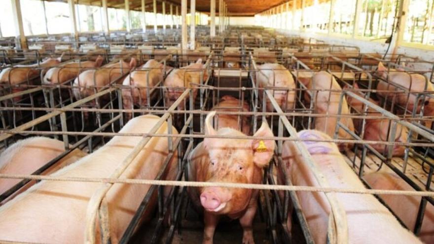 Bienestar animal: ¿Hacia una ganadería sin jaulas en 2023?