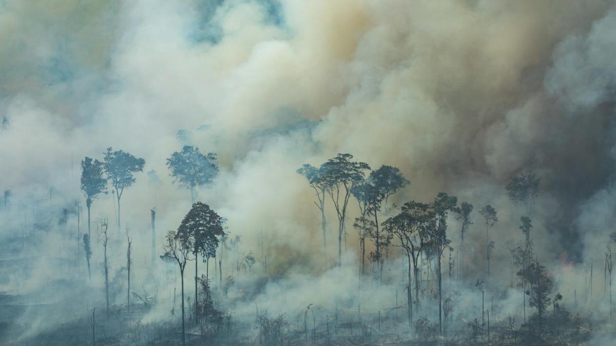 La Selva amazónica, ardiendo