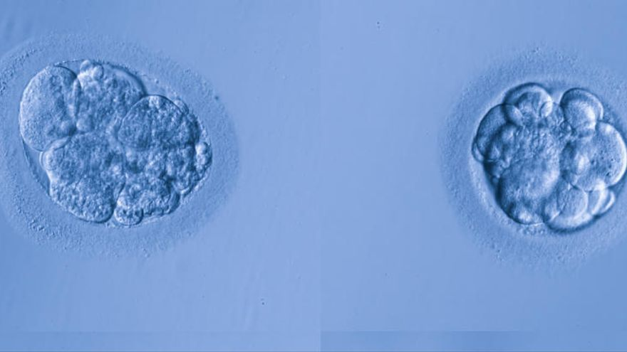 El Gobierno autoriza las primeras modificaciones genéticas en embriones