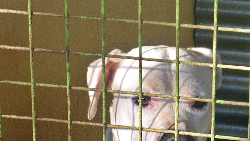 Detenido el dueño de un perro que mordió a una niña de cinco años en la cara en Valencia