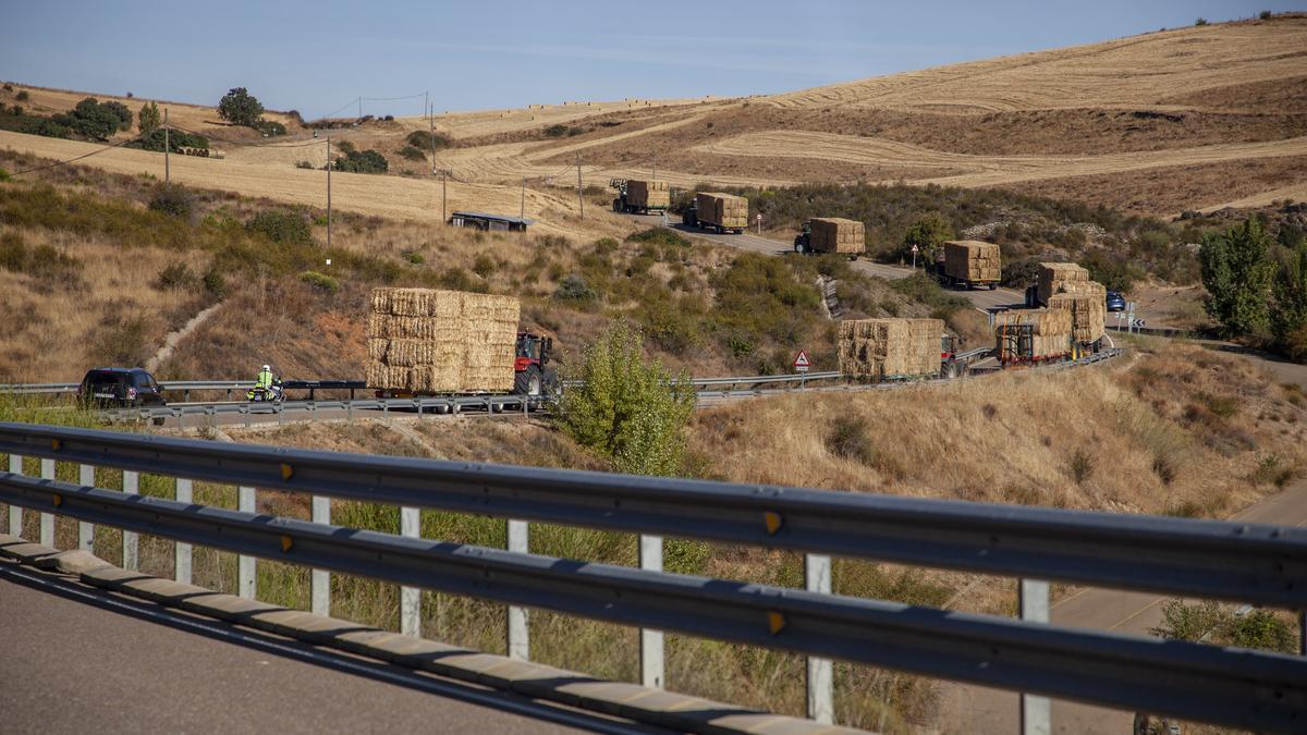 La caravana de tractores cargados de paja marchan hacia Vegalatrave por la carretera que discurre por un campo recientemente segado.