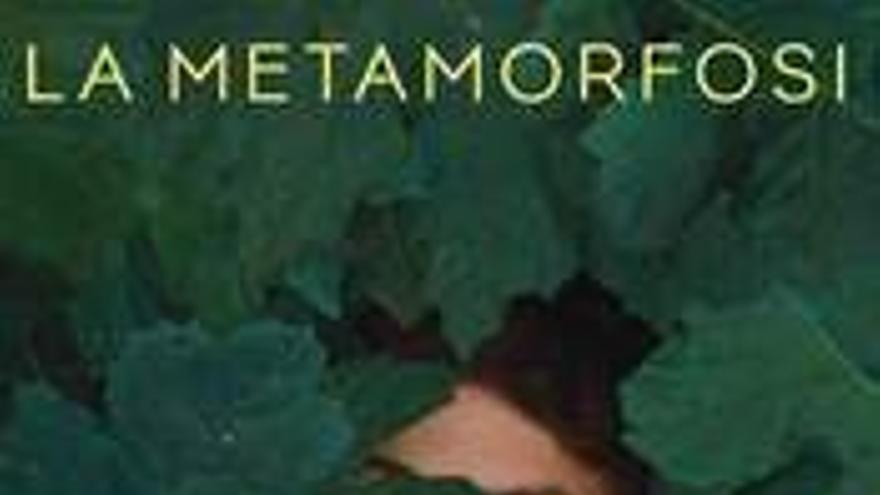 La metamorfosi dels ocells