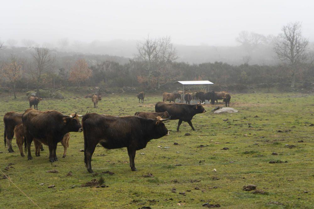 Zamora DesAparece | Castromil, el vértice de los tres Reinos