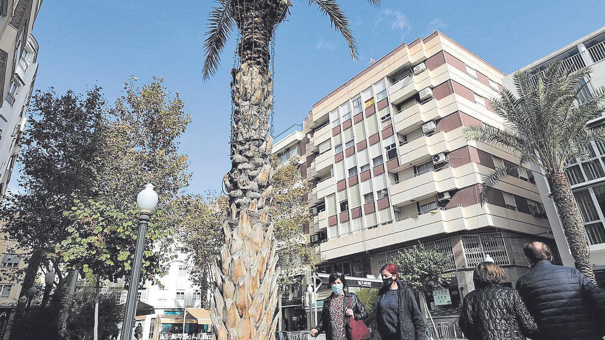 A palm tree with municipal lighting