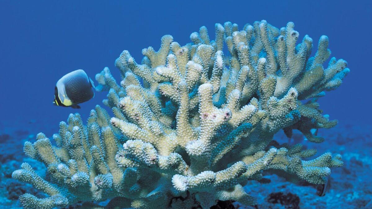 El calentamiento mató el 14% de corales del mundo entre 2009 y 2018