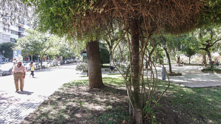Cáceres ya tiene una ordenanza que protege sus 45.000 árboles