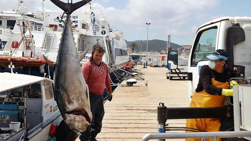 Las capturas pesqueras en Ibiza superan ligeramente las de 2019 pese al covid