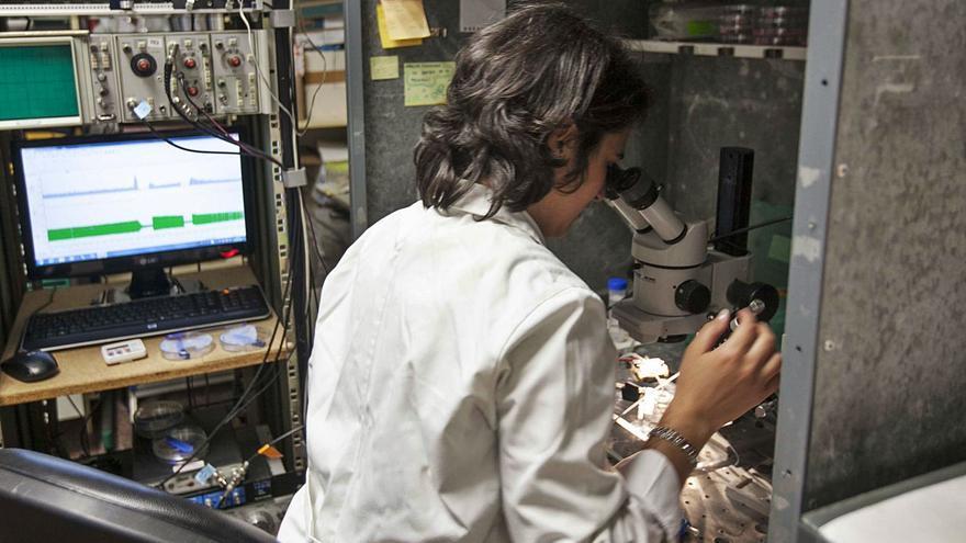 La UMH investiga con socios europeos la ceguera por falta de transparencia de córnea
