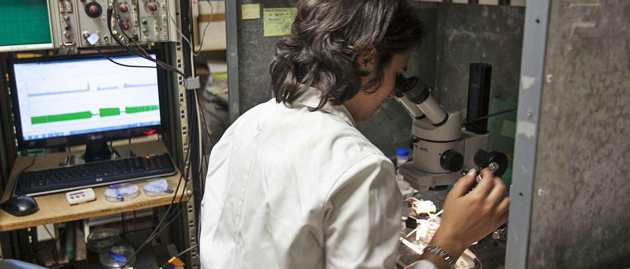 Una investigadora de la Universidad Miguel Hernández trabaja en un proyecto relacionado con los problemas de visión.  
