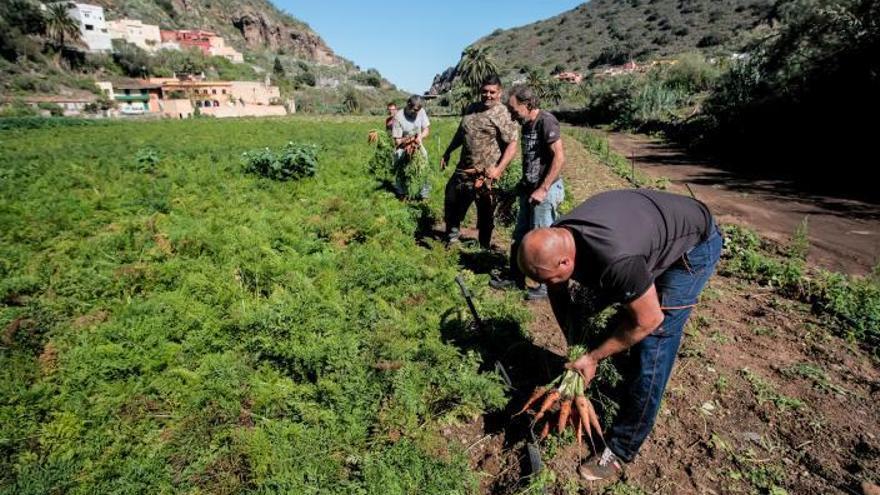 La Isla relanza el Banco de Tierras para recuperar 18.000 hectáreas de cultivo