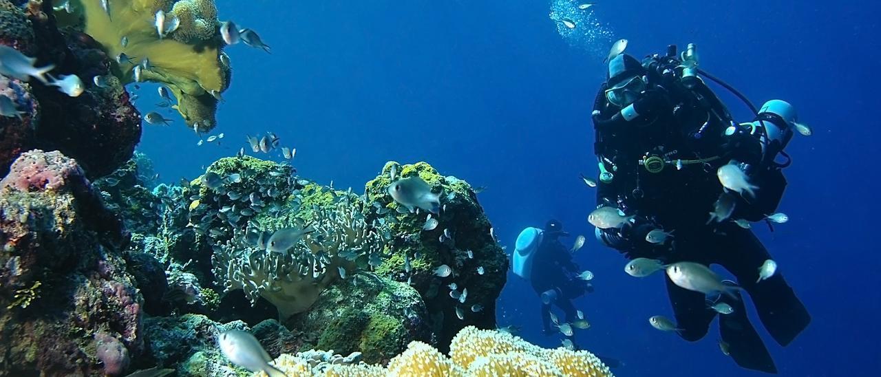 Image result for cosechando Aplidium albicans en el mar de Ibiza