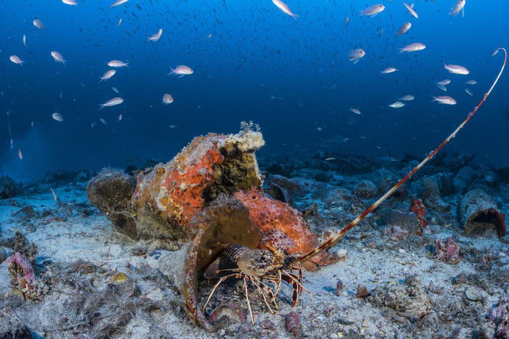 Ein Team von Archäologen hat vor Mallorca ein römisches Schiffswrack gefunden, das vor etwa 1.800 Jahren gesunken sein muss. Das Wrack liegt in etwa 70 Meter Tiefe in der Nähe der Insel Cabrera südlich von Mallorca, wie am Freitag bei einer Präsentation bekannt gegeben wurde.