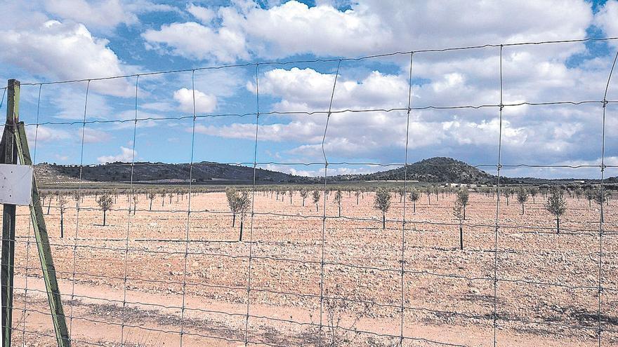 Llevan a la Fiscalía la destrucción de una zona protegida en Villena