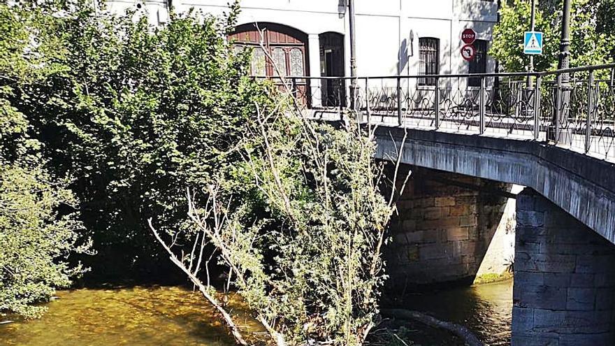 Reclaman que se retire del río un árbol que lleva varios años anclado junto al puente