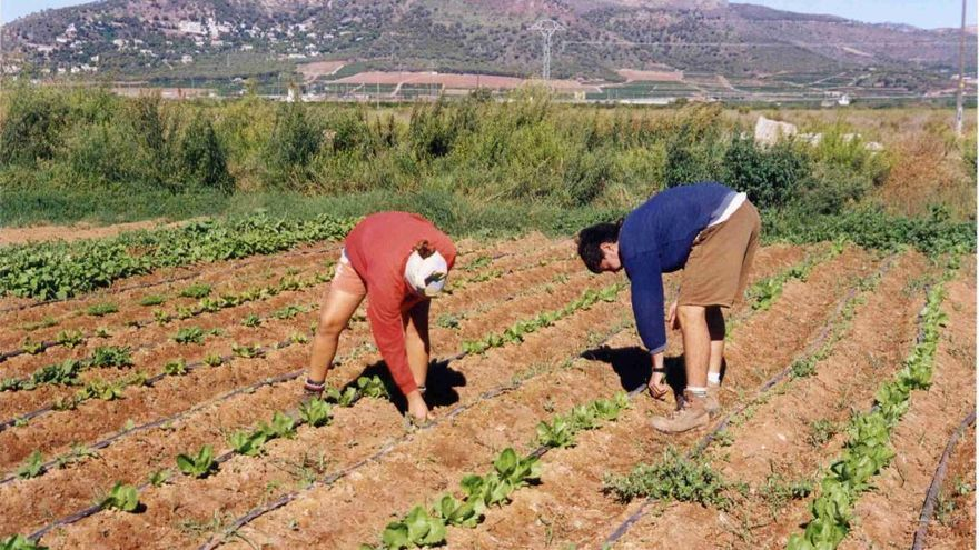 El Gobierno defenderá que los agricultores a tiempo parcial tengan ayudas de la PAC
