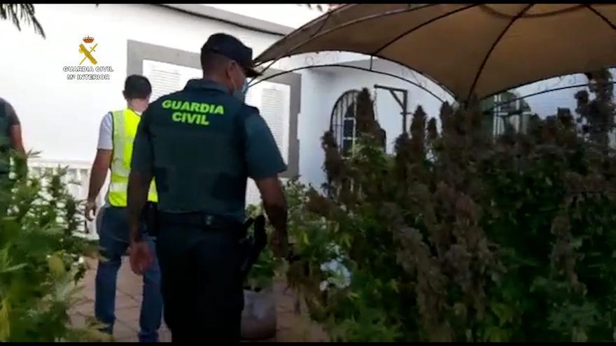 Detienen a siete personas y desmantelan dos cultivos de marihuana en Gran Canaria